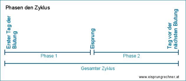 Phasen des Zyklus und Eisprung